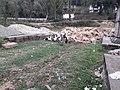 Godawari botanical garden 20190401 171502.jpg