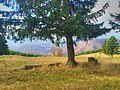 Golija - panoramio (14).jpg