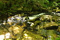 Golitha Falls (4023).jpg