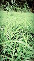 Grass View.jpg