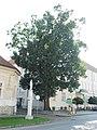 GuentherZ 2011-09-24 0157 Haugsdorf NOe Naturdenkmal.jpg