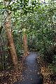 Gumbo limbo trail, NPSPhoto, R. Cammauf (9103253958).jpg