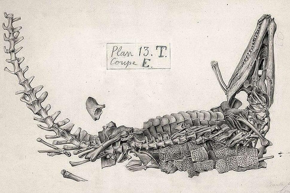 Gustave Lavalette ; Goniopholis