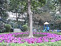 HK Sheung Wan Mid-levels 堅道花園 Caine Road Garden tree Mar-2011.JPG