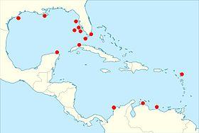 Haliotis pourtalesii en el area del caribe 2013 000.jpg