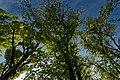 Harderwijk - Tonsel - Harderwijkerweg - View Up on Poplars & Birches.jpg