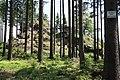 Harzwanderung Oberharz um Braunlage - Wurmberg - An und um die Scherstorklippe - panoramio (1).jpg