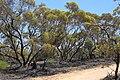 Hattah-Kulkyne National Park (31820608703).jpg