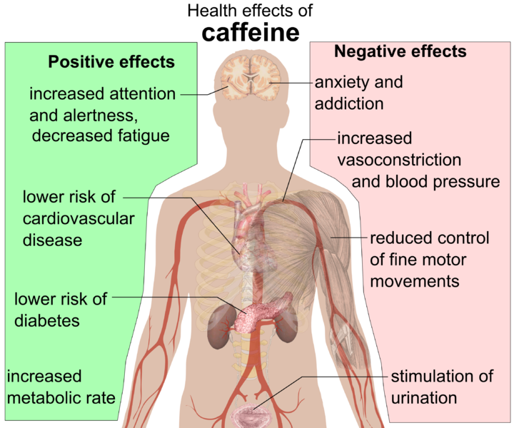 File:Health effects of caffeine.png