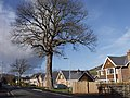 Hedgerow trees by new housing - geograph.org.uk - 623120.jpg