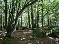 Higher Hill Wood - geograph.org.uk - 230679.jpg