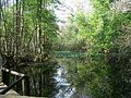 Highland Hammocks SP Swamp Trail06.jpg