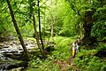 Hikers-seneca-trail - West Virginia - ForestWander.jpg