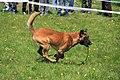 HiperParada animalelor la CORA (4551484103).jpg