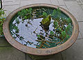 Hokokuji aquarium3.jpg