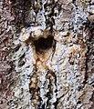Hole on tree.jpg