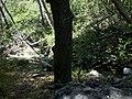 Holly Jim Trail - panoramio (9).jpg