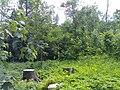 Holmbergska parken 1 lund.jpg