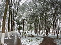 Huazhong University of Science and Technology - snow - P1050011.JPG