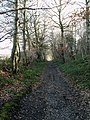 Hugset Wood footpath to Higham Bottom - geograph.org.uk - 680742.jpg