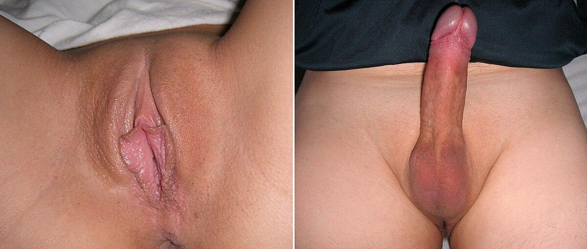 Vulva climax videos