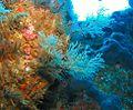 Hydrozoa Rakitu-Island MNP9142 NIWA101027 edited.jpg