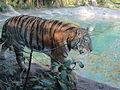 ITALY - Tigre Siberiana - Parco Natura Viva - Verona 3.JPG