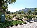 Ikeno-okuen Peony garden.jpg