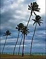 Ilha de Itamaracà - Pernanbuco - panoramio.jpg