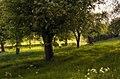 In de boomgaard - panoramio.jpg