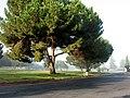 Inglewood Park Cemetery-431041380 03.jpg