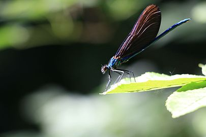 Insekt - Spomenik prirode Dvorska bašta.jpg