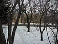 Irkutsk. Akademgorodok. February 2013 - panoramio (145).jpg