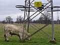 Irrita-bull - geograph.org.uk - 702517.jpg