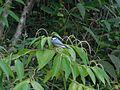 Is bird 2.jpg