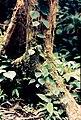 Isla Yanamono 1980 47.jpg