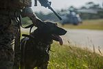 It's a TRAP! Marine dog tracks personnel for Blue Chromite 151028-M-RZ020-001.jpg