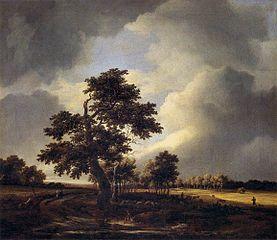 Route avec des champs et chêne