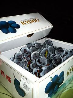 Kyoho (grape) Variety of table grape