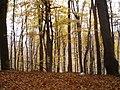 Jeseň na Babe - panoramio.jpg