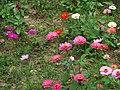 Jiuhu Flower Field 九湖花田 - panoramio.jpg