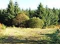 Junction of forestry tracks near Rockcliffe - geograph.org.uk - 1636052.jpg