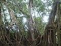 Jutaí - State of Amazonas, Brazil - panoramio (12).jpg
