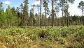 Jyväskylä - swamp.jpg