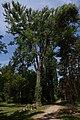 Kámoni Arborétum Szombathely Kamon Arboretum Park 16.jpg