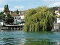 Küsnacht - Salix × sepulcralis - Zürichsee - ZSG Wädenswil 2012-08-12 16-52-13 (WB850F).JPG