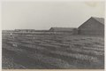 KITLV - 5482 - Kleingrothe, C.J. - Medan - Seed beds on a tobacco plantation of the Deli Company, Deli - circa 1915.tif