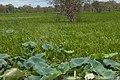 Kakadu National Park-29 (8309762010).jpg