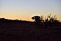 Kalahari landscape, Kalahari, Northern Cape, South Africa (20353359860).jpg