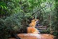 Karura Forest Nairobi 06.JPG